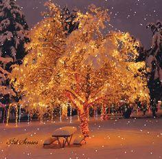 Snow Falling Over Christmas Tree beautiful nature winter snow christmas christmas gifs winter gifs