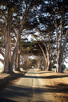 Point Reyes California is one of the most beautiful places on the Pacific Coast. Find out why you should visit on Simply Davelyn!