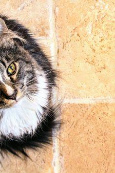 New free photo by Jenna Hamra. See more of Jenna's work on Pexels at https://www.pexels.com/u/jenna-hamra-248942/ #animal #pet #cute