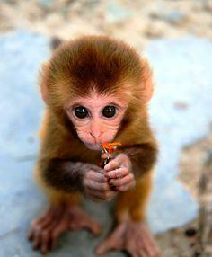 Cute Exotic Animals | Repinned via Monica Ridley