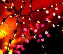 christmas, christmas tree, house, lights