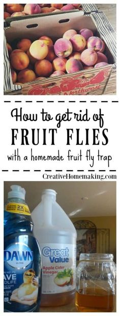 How to get rid of fruit flies and gnats in the house FAST with a simple homemade fruit fly trap. It really works! Tips for controlling and getting rid of fruit flies in your home with a homemade fruit fly trap. Homemade Fruit Fly Trap, Diy Fruit Fly Trap, Fruit Fly Traps, Recipe For Fruit Fly Trap, Fruit Fly Spray, Fruit Fly Killer, Homemade Gnat Trap, Diy Gnat Trap, House Cleaning Tips