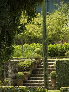 Garden Staircase,  line with alternating hi , low pattern adds interest to the view.