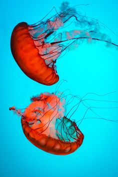 trans-ideal: Jellyfish | trans-ideal