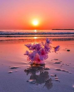 Wallpaper Nature Flowers, Beautiful Nature Wallpaper, Beautiful Sunset, Ocean Pictures, Colorful Pictures, Nature Pictures, Moonlight Photography, Nature Photography, Good Evening Greetings