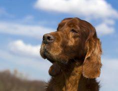 Quanto tempo vivem os cães? Saiba mais sobre a expectativa de vida dos cachorros