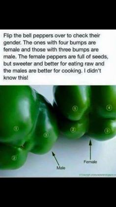 How to best choose a bell pepper for eating raw or cooking. FEMALE is better for eating raw and MALE is better for cooking. The More You Know, Did You Know, Good Food, Yummy Food, Tasty, Fun Food, Wtf Fun Facts, Random Facts, Eating Raw
