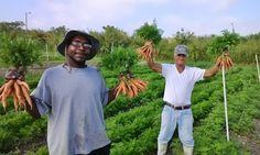 A fazenda Verde Community Farm & Market, em Miami, nos Estados Unidos…