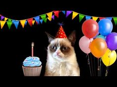 ▶ Happy Birthday Song by Grumpy Cat - YouTube
