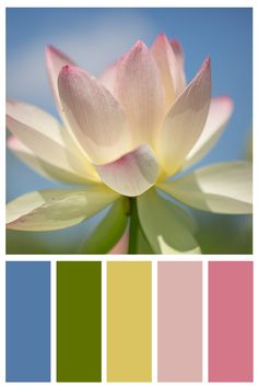 White Lotus Blossom Photo Print, Fine Art, Wall Art, Home Decor Colour Schemes, Color Trends, Color Patterns, Color Combinations, Color Palate, Design Seeds, Wall Decor, Wall Art, Color Stories