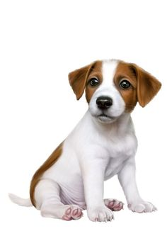 Trendy Dogs And Puppies Jack Russell Animals 56 Ideas Cute Puppies, Dogs And Puppies, Cute Dogs, Dog Wallpaper, Animal Wallpaper, Benfica Wallpaper, Animals And Pets, Cute Animals, Best Dog Toys