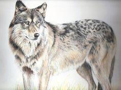 Autumn wolf by In-The-Distance.deviantart.com on @DeviantArt