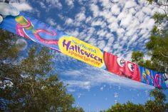 """O SeaWorld's Halloween Spooktacular é o evento de Halloween do parque SeaWorld San Diego que pode ser curtido por crianças e adultos, que inclui a tradicional brincadeira de trick-or-treat (""""doce ou travessura""""), dança, shows, artes e artesanatos com temas marinhos, encontros próximos com os animais e outras atividades. #HalloweenSpooktacular #SeaWorldSanDiego Sea World, San Diego, Halloween, California, Outdoor Decor, Arts And Crafts, Spooky Halloween"""