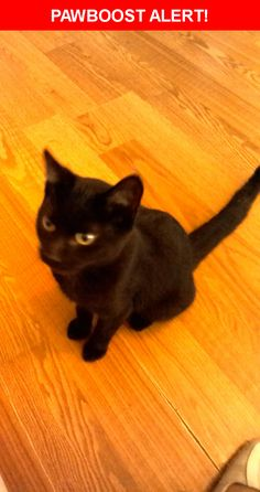 Is this your lost pet? Found in Indianapolis, IN 46222. Please spread the word so we can find the owner!  Description: Black with gold eyes, about 1 year old  Nearest Address: 10th & Somerset