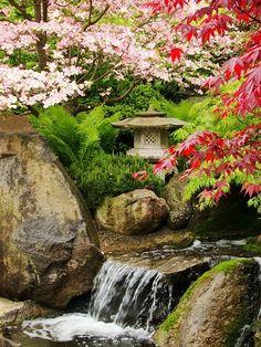 Cherry blossom and waterfall in Japanese garden Asian Garden, Beautiful World, Beautiful Gardens, Beautiful Places, Landscape Design, Garden Design, Outdoor Gardens, Zen Gardens, House Gardens