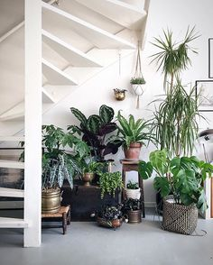 Plants purify air for us. Decorating living room with Indoor plants makes us feel more comfortable and relaxed. Indoor plants are those that can live with minimal or no sunlight. Here are some of the ways to decorate indoor plant in living rooms. Interior Plants, Interior And Exterior, Interior Modern, Interior Design, Plantas Indoor, Jungle Decorations, Decoration Plante, Plants Are Friends, Under Stairs