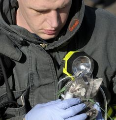 A firefighter administering oxygen to a cat rescued from a house fire.