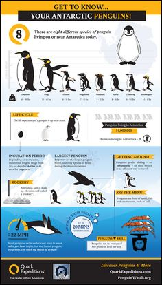 Coz i just love how cute they are :) Thank you God for Penguins!