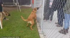 They were there to find a new dog as Zuzu was now too sad since her father had died