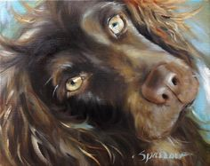 "SPARROW Boykin Spaniel ""Day Dreams"" art gift for Dog lover portrait pet painting #boykin #hangingthemoon"