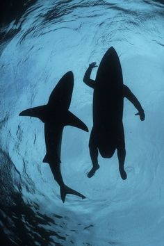 Swimming with Sharks - by: { Thomas P. Peschak }