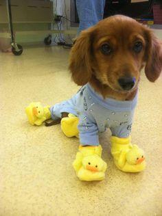 I want this dog soooooo bad!!!!!