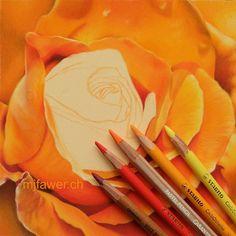 Rose orange au pastel sec Pastel Drawing, Pastel Art, Caran D'ache, Pastel Pencils, Realism Art, Pastels, Orange, Colors, Artwork