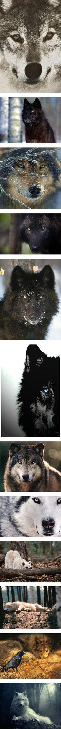 """""""Canines"""" by kay4life ❤ liked on Polyvore"""