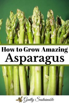 Learn how to plant asparagus from beginning to end, with lots of photos! From ordering crowns, digging your trenches, fertilizing and harvesting, I'll show you everything about how to grow amazing asparagus! Asparagus Roots, Asparagus Plant, Fresh Asparagus, Organic Gardening, Gardening Tips, Sustainable Gardening, Organic Farming, Vegetable Gardening, Peat Moss