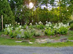My moon Garden - the beginning by Judith Gerber