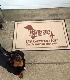 Dachshunds!! lol sometimes this is true