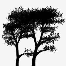 """Résultat de recherche d'images pour """"silhouette d'arbres"""" Images, Celestial, Outdoor, Searching, Outdoors, Outdoor Games, Outdoor Life"""