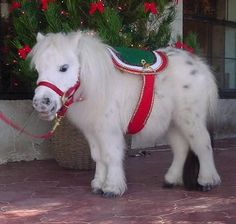 Thumbelina, the world's smallest horse The height of this dwarf horse is only 17 inches. Description from pinterest.com. I searched for this on bing.com/images