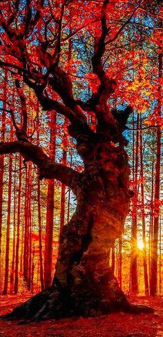 "audreylovesparis: "" Autumn forest near the Belintash Rock landmark in the Rhodope Mountains of Bulgaria • Evgeni Dinev Photography """