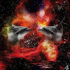 »»» Mit zu den beliebtesten Tieren gehören die Delphine, sie gelten als hochintelligent und...    #krafttiere