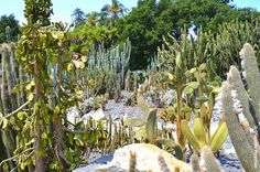 "The Galloping Gardener: ""Wow"" gardens of the world I - Lotusland near Santa Barbara, California"