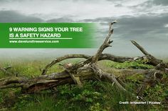 Trees are great for beautifying your home, but sometimes homeowners need to take a few steps to keep their yard safe. Here are a few warning signs that can help ensure you stay safe around your trees.