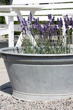 ♥ Zinc tub planted with lavendar. Some zinc tubs like this would be pretty on the back patio (or any number of places).