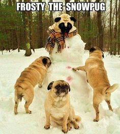 Frosty the Snowpug