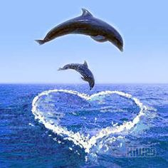 beautiful love dolphins images