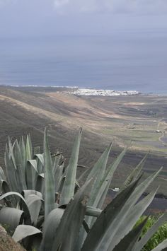 Lanzarote The extraordinary volcanic soils of Lanzarote greet you and the islands calmness and saturninity invite you to disconnect��_