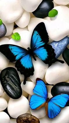 Butterfly 1 wallpaper by Ninoscha - ce - Free on ZEDGE™ Blue Butterfly Wallpaper, Flower Phone Wallpaper, Butterfly Art, Cellphone Wallpaper, Colorful Wallpaper, Galaxy Wallpaper, Animal Wallpaper, Hd Wallpaper, Decoration Vitrine