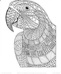Macaw Exotic Bird Zentangle Coloring Page By InspirationbyVicki On Etsy