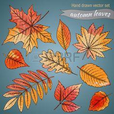 dibujos de hojas de otoño: Conjunto botánico: mano hojas dibujadas altamente detallados con textura de acuarela.