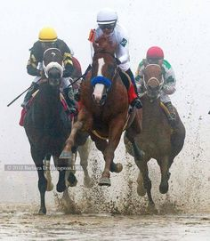 Justify FLYING in the fog to win the Preakness! photo by Barbara Livingston All The Pretty Horses, Beautiful Horses, Faster Horses, Sport Of Kings, Thoroughbred Horse, Horse Horse, Horses And Dogs, Racehorse, Horse Pictures