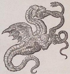 Dragon v. Serpent