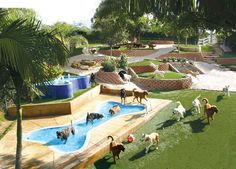 Choosing the Right Dog Boarding Facility for Your Pet , Boarding Choosing Dog Facility … Shelter Dogs, Animal Shelter, Animal Rescue, Hotel Pet, Indoor Dog Park, Dog Playground, Pet Resort, Pet Boarding, Dog Rooms