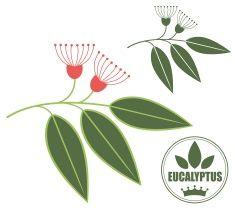 stock-illustration-57429956-eucalyptus.jpg (235×208)