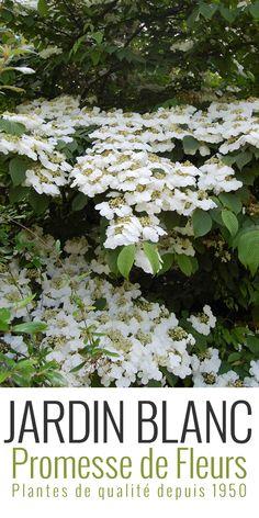 Comment Tailler Callistemon : 46 meilleures images du tableau arbustes fleurs garden gardening et plants ~ Nature-et-papiers.com Idées de Décoration