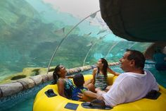 Sea world rides  | Aquatica San Antonio Water Ride is First in the World to Pass Through ...